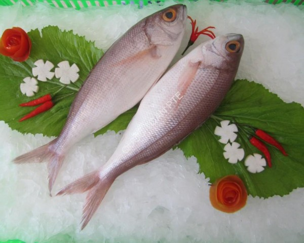 crimson-snapper-pristipomoides-filamentosus