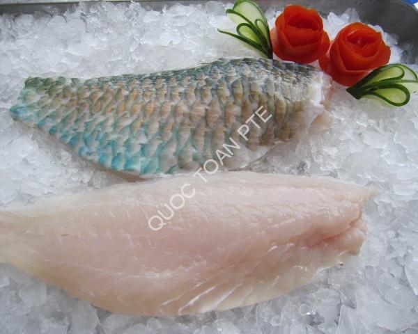 parrotfish-skinon